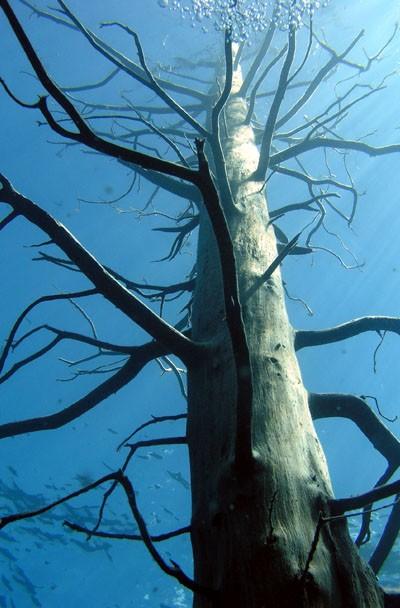Lago traful - bosque sumergido de la patagonia