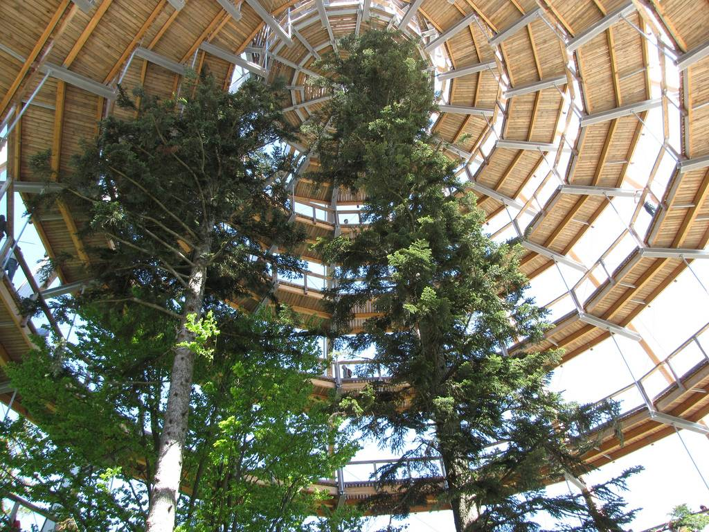 Baumwipfelpfad: El mayor paseo a lo alto de un árbol en el mundo