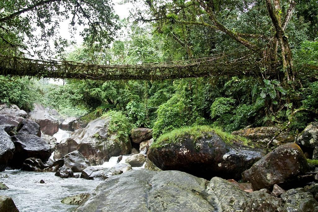 Meghalaya: Los puentes de raíces vivas de la India