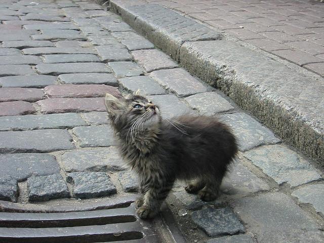 Gatito en las calles de Riga