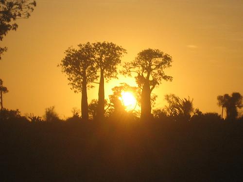 Baobab at sunset (Mangily, Madagascar)