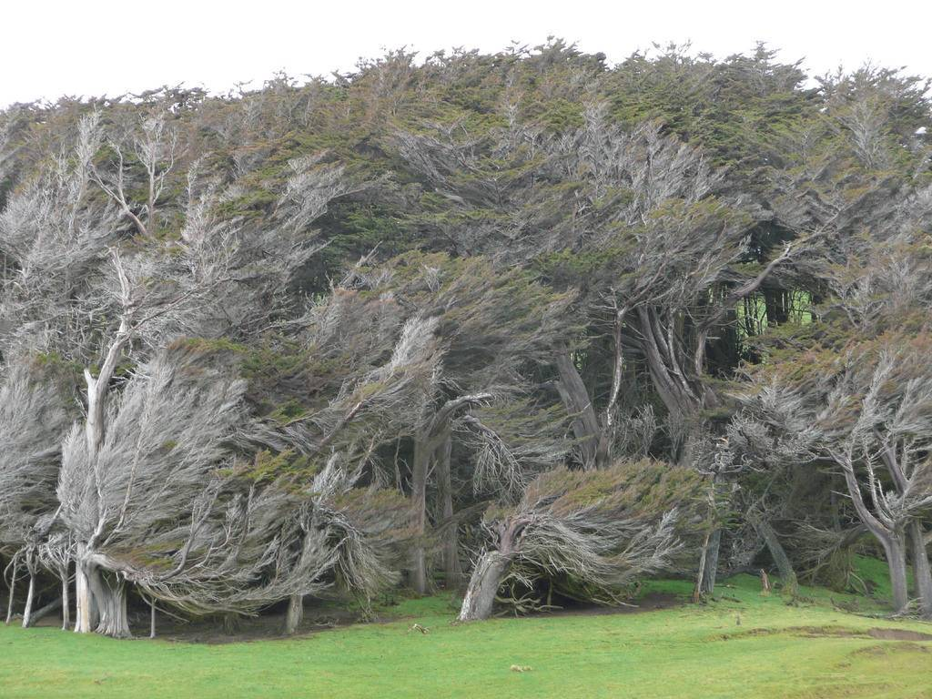 The Twisted Trees of Slope Point