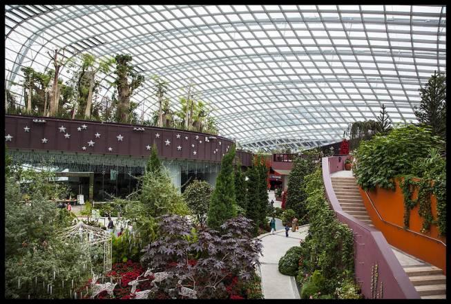 Los súper árboles de Singapur 1