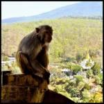 Macaco disfrutando de las vistas