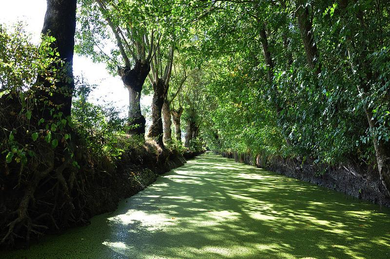 Marais Poitevin: La Venecia Verde de Francia