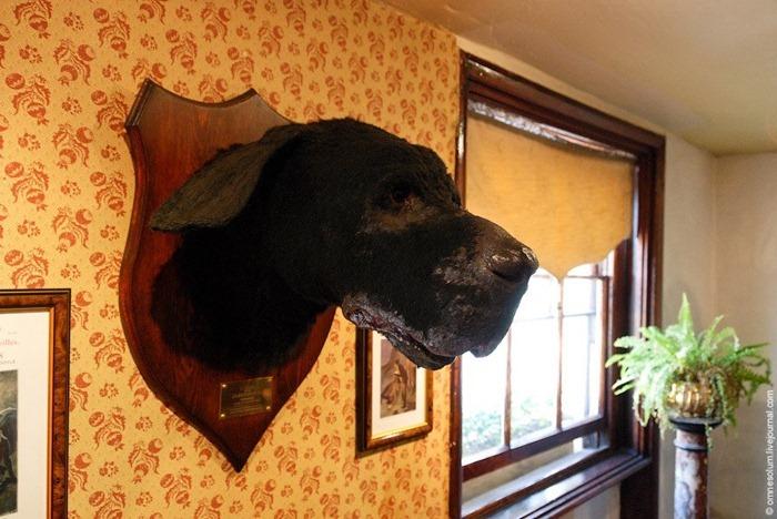 Cabeza del perro de los Baskerville