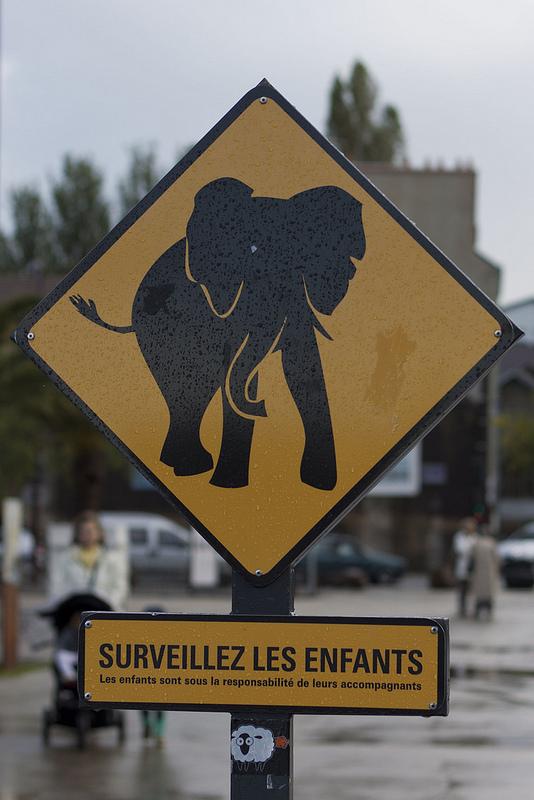 ¡Cuidado con el elefante!