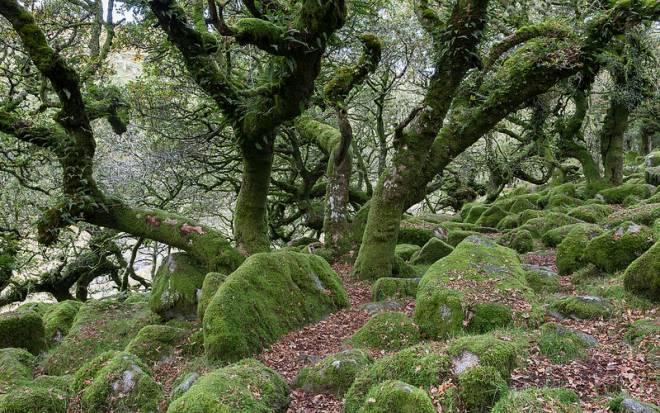 El encantado Bosque de Wistman