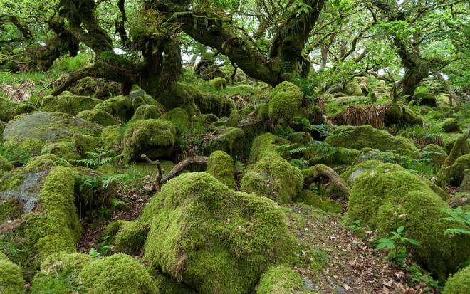 Wistman's Wood, Dartmoor