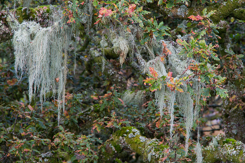 Bosque de Wistman el lugar más encantado en Dartmoor