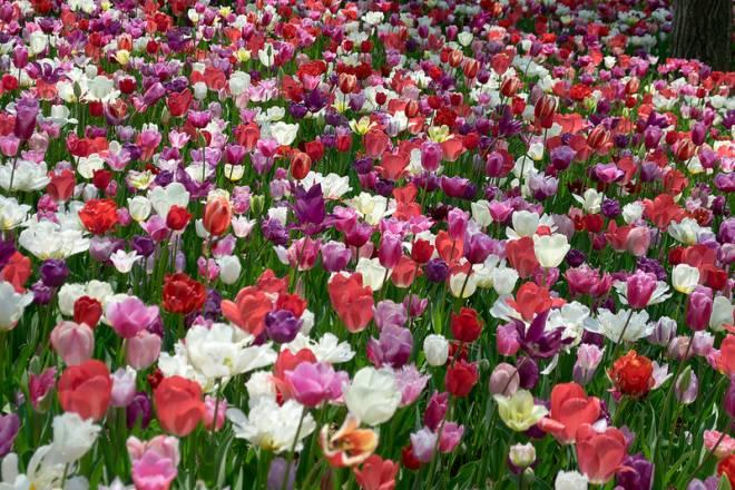 Paraíso floral en el Parque Costero Hitachi