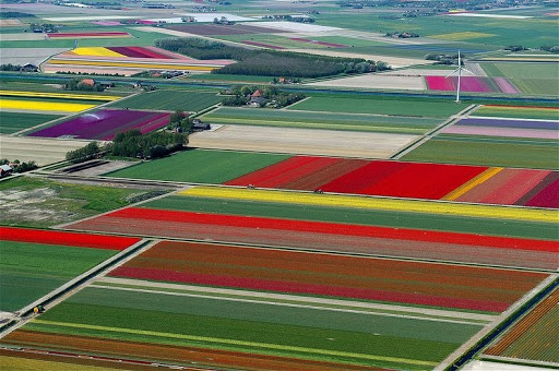 Aerial Photos of Tulip Fields in the Netherlands