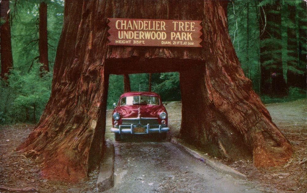 Los árboles túnel de California