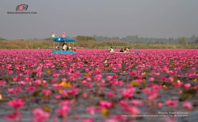 Lago de loto rojo, Kumphawapi, Tailandia