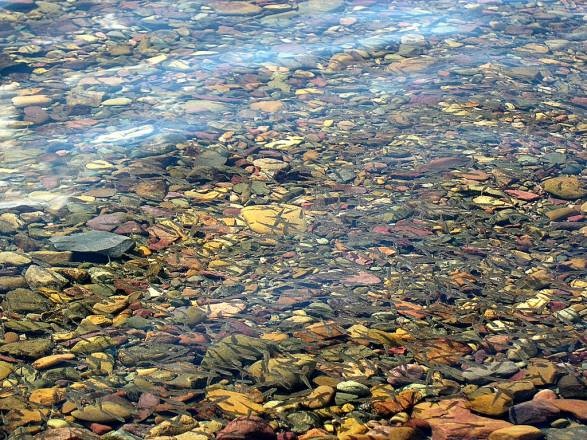Las piedras de colores del lago McDonald - School of fish in Lake McDonald
