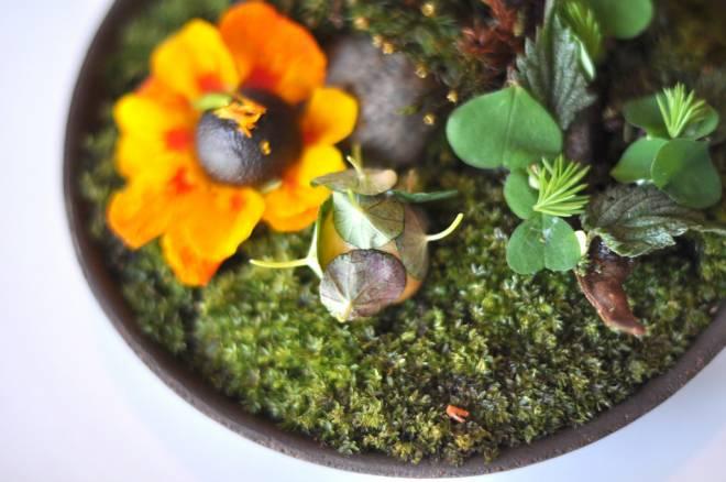 Restaurant Noma: Solbær med gæret fløde, syltet og røget vagtelæg og knækbrød med myrer og urter