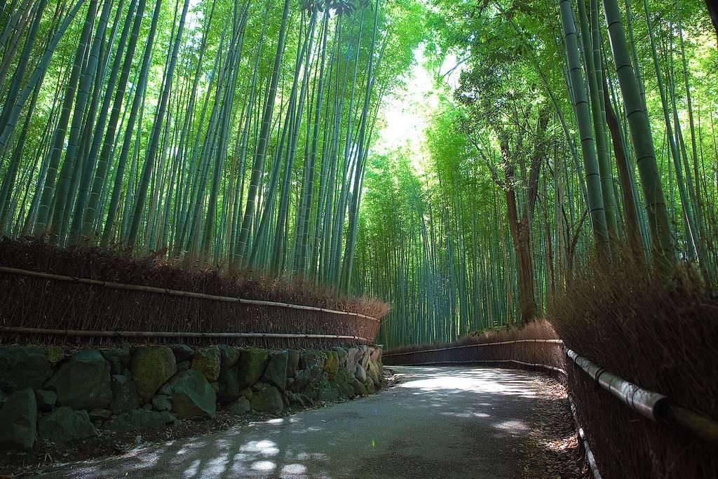 50 lugares más bellos del mundo. Arashiyama. www.viajerosdelmisterio.com