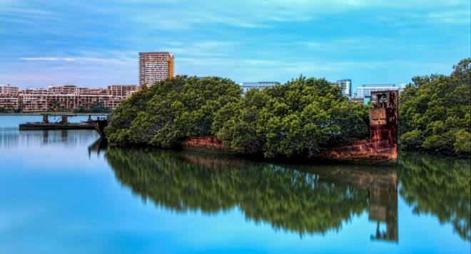 Homebush Bay y su bosque flotante
