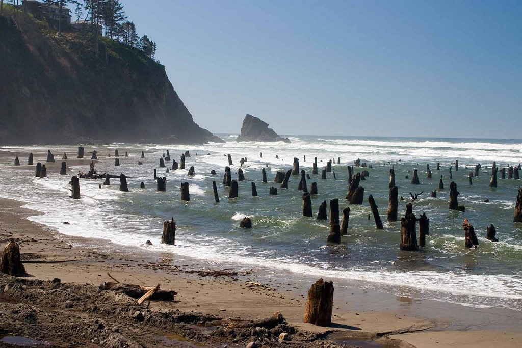 Ghost Forest, Neskowin, OR