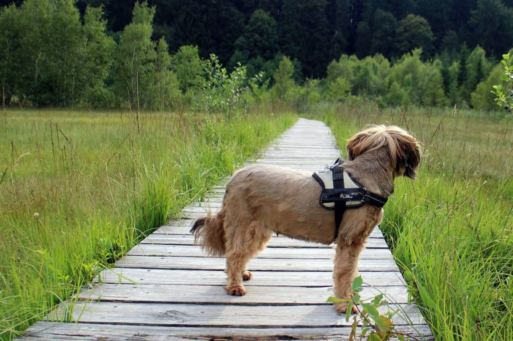 Consejos para el senderismo con perros 1