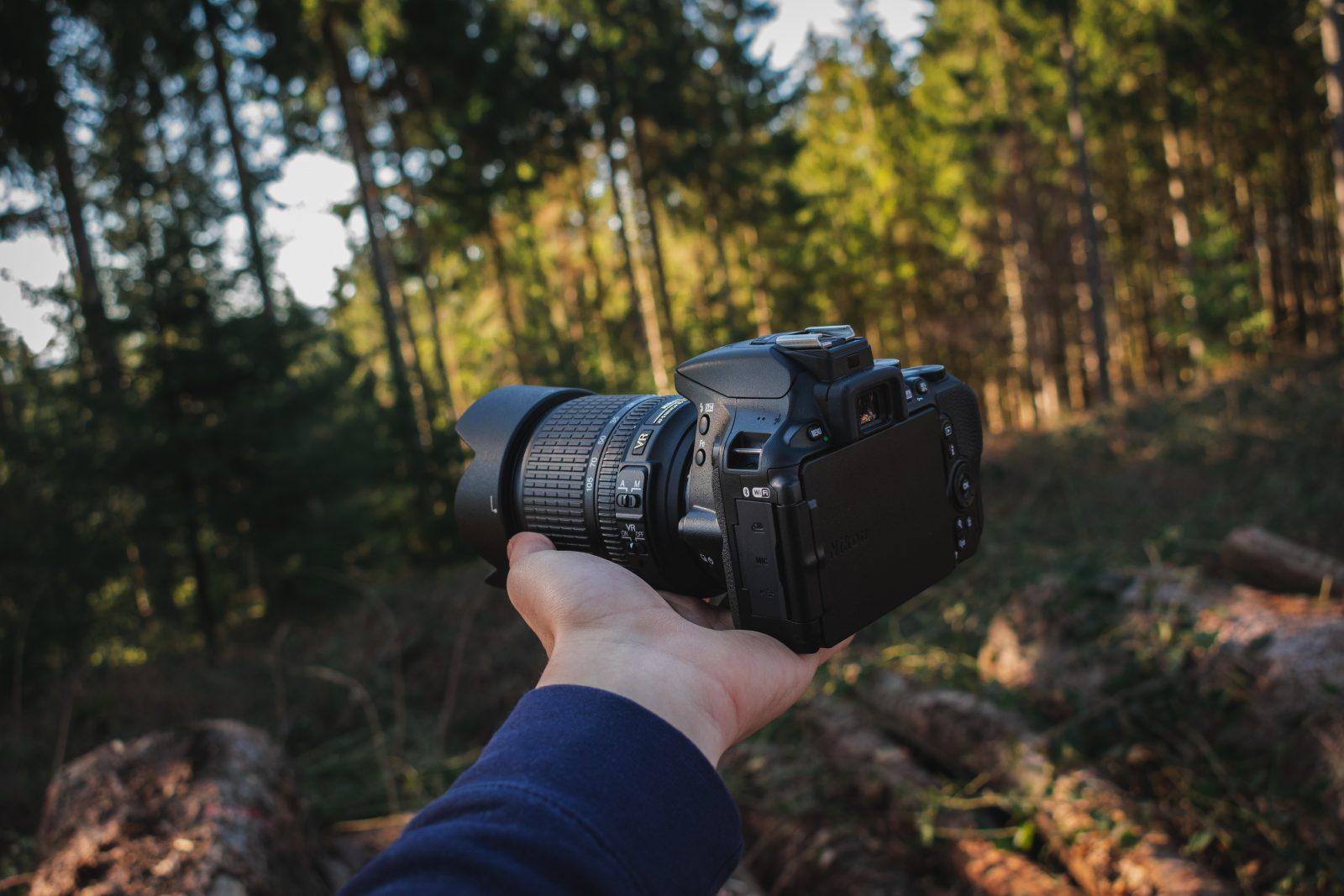 Mejores cámaras para fotografía de vida silvestre