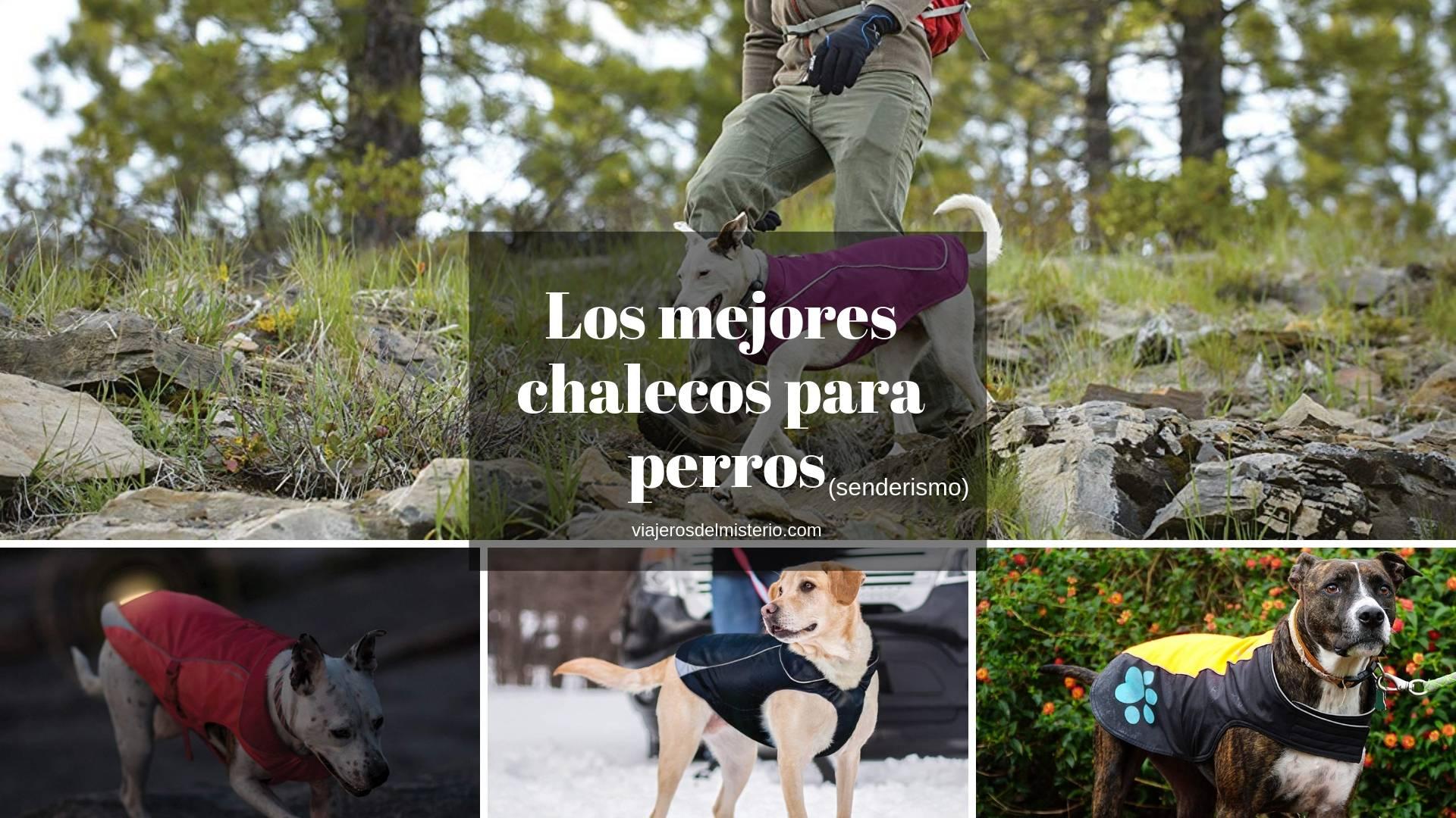 Los mejores chalecos para perros