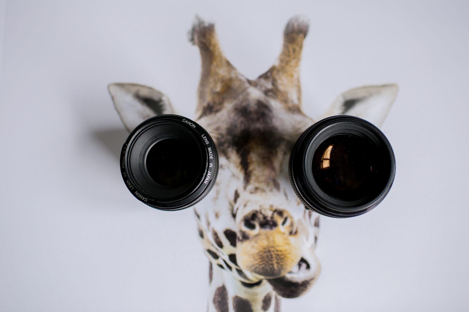 Mejores objetivos para fotografiar fauna silvestre