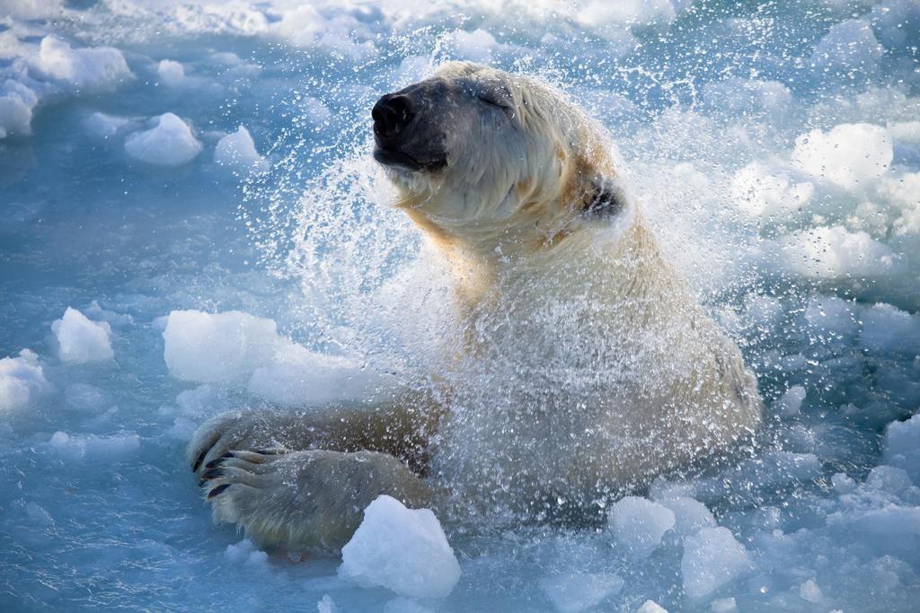 Arctic Fox Igloos: ¿Pasarías una noche en iglúes de cristal de lujo mirando hacia la aurora boreal? 1