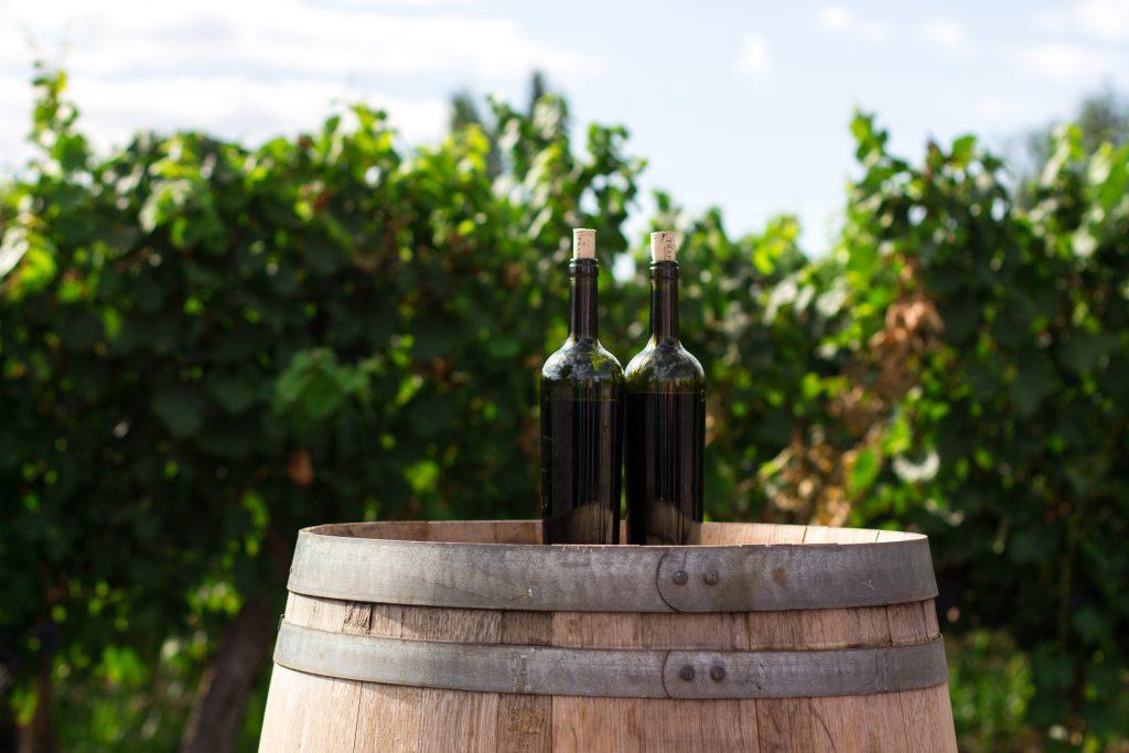 Logroño: paisajes con olor a vino 2