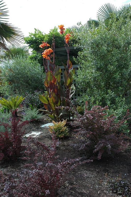 Casas de flores en Alki, Seattle, Washington 2